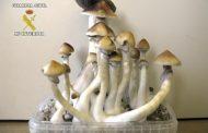 Denver quiere ser la primera ciudad de EEUU en legalizar hongos alucinógenos